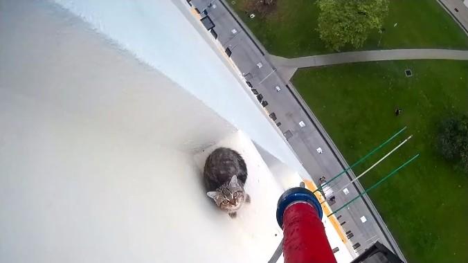 高所から猫を救出2