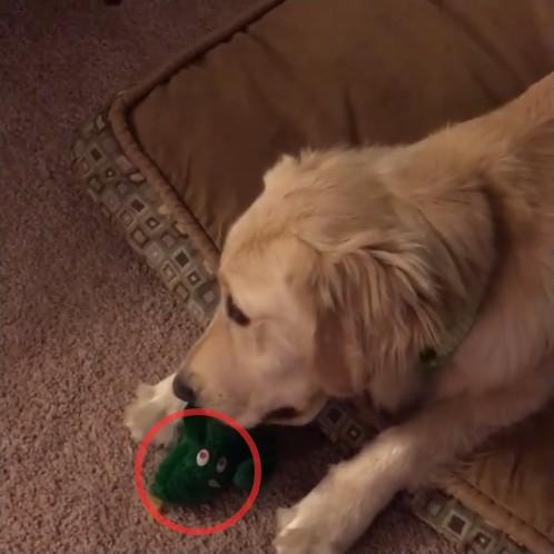 犬が好きなぬいぐるみを巨大化1