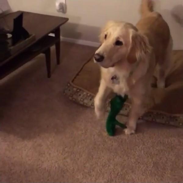 犬が好きなぬいぐるみを巨大化4
