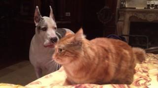 犬と猫のベッドの取り合い
