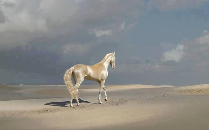 黄金の馬2