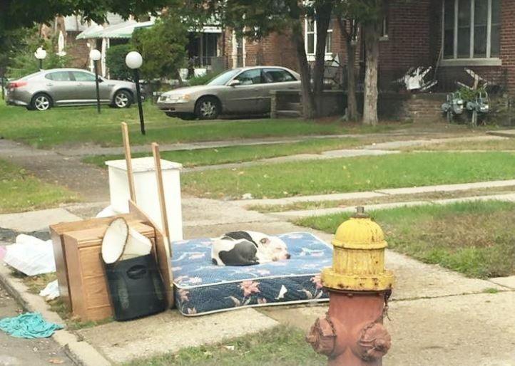 ゴミ捨て場に捨てられた犬1