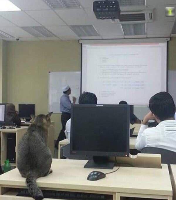 猫が授業で勉強1