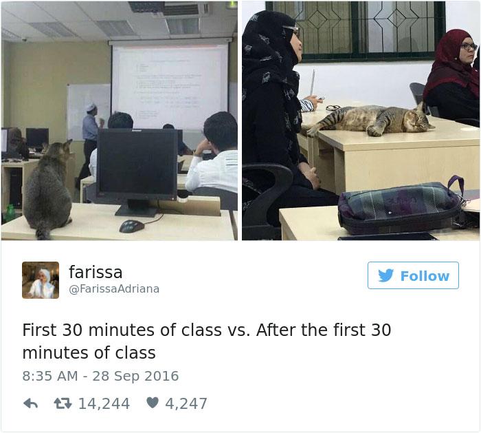 ネコ授業寝る