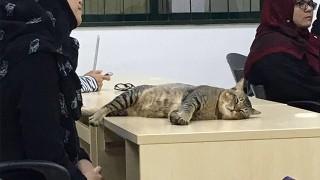授業で寝るネコ