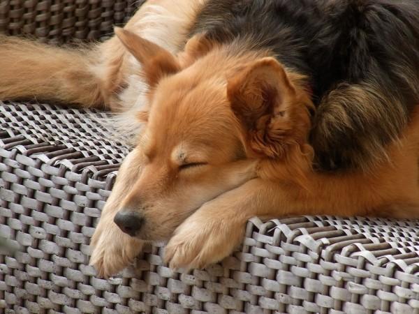 夢見る犬2