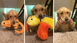 犬がおもちゃを運ぶ