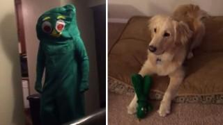 犬とハロウィン