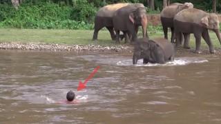 ゾウと溺れる人間