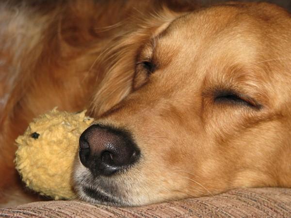 夢見る犬3