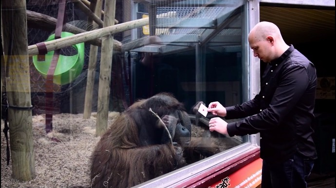 動物園でマジック、オランウータン2