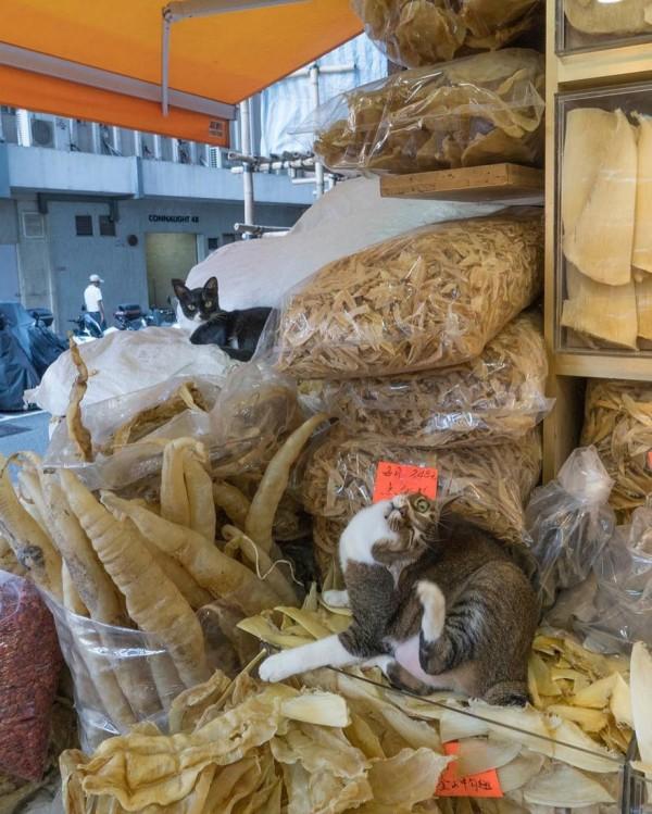 香港のお店にいる猫2