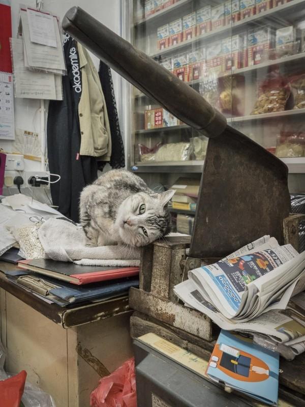 香港のお店にいる猫5