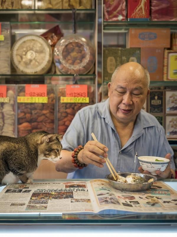 香港のお店にいる猫4