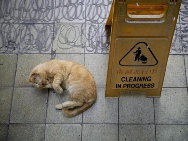 香港のお店にいる猫14
