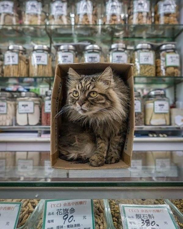 香港のお店にいる猫3