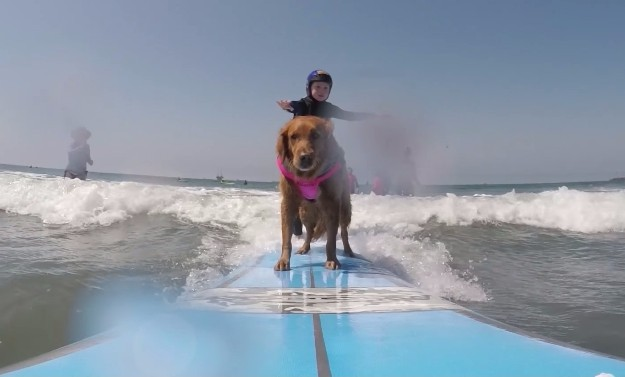 サーフィンをする犬1