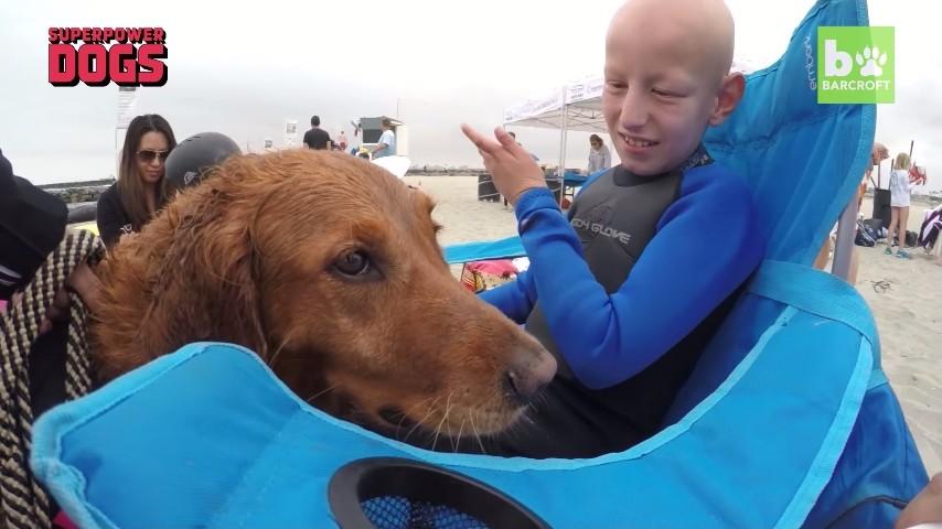 サーフィンをする犬3