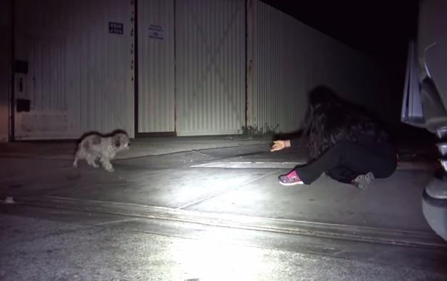 犬を捕まえようとする