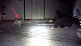 保護する犬
