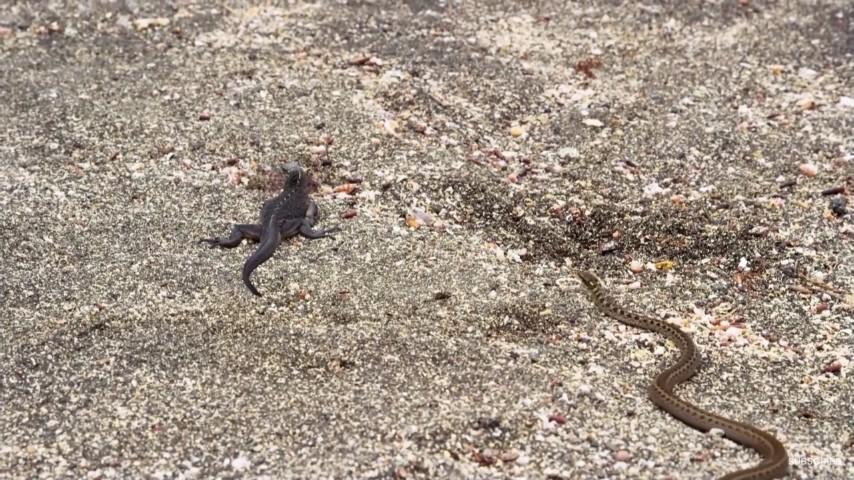 イグアナとヘビ1
