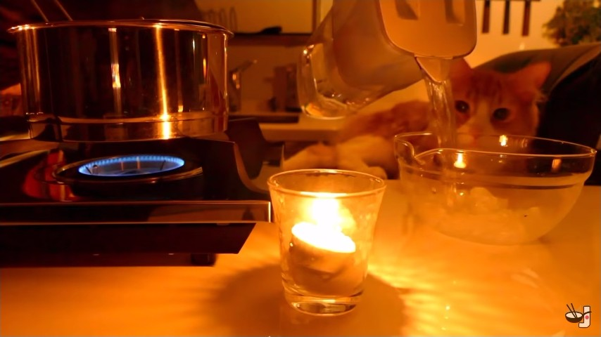 手作り猫ご飯3