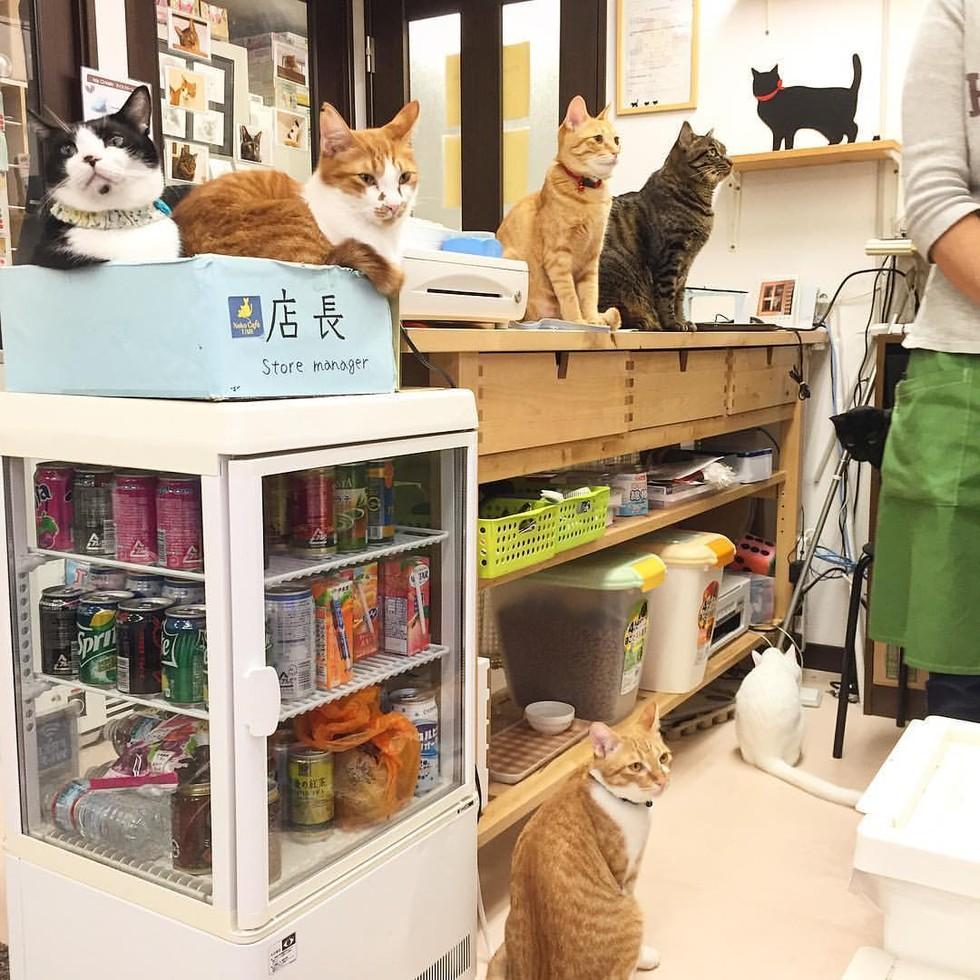 京都の猫カフェ1