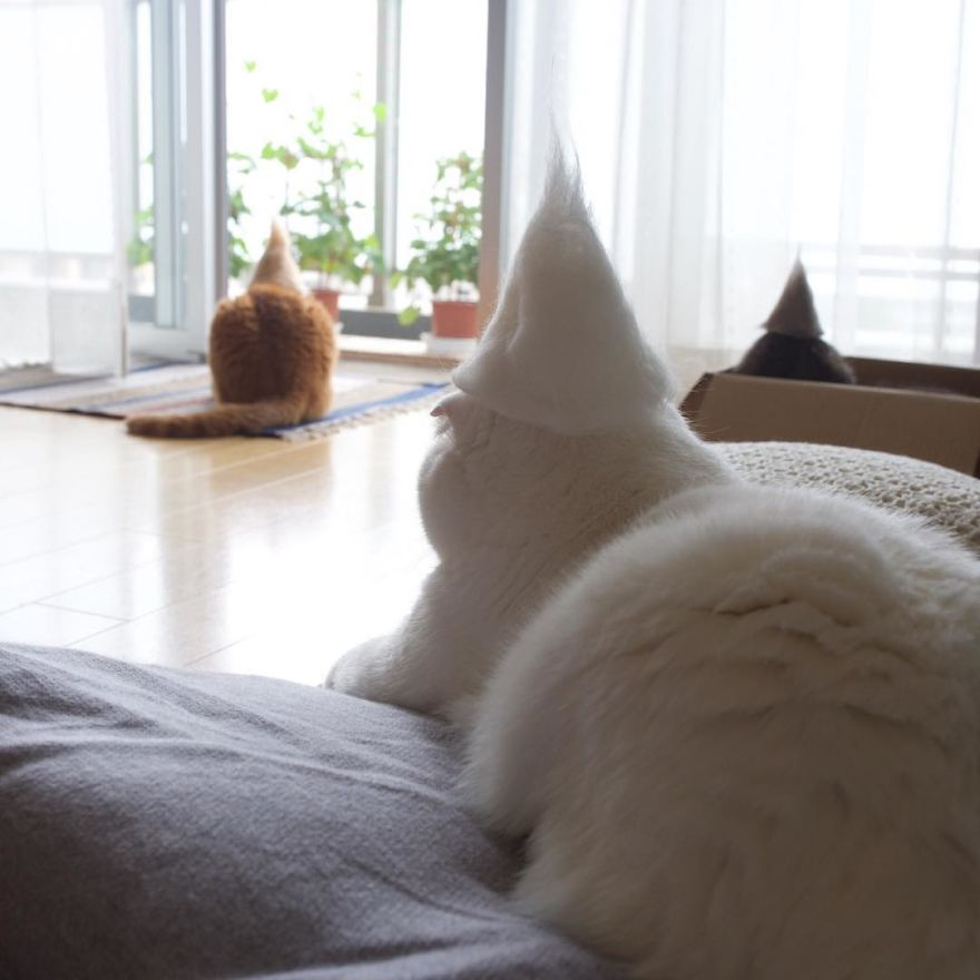 cat12