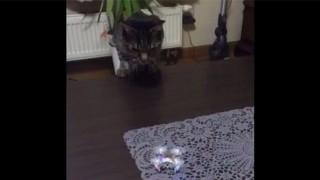 猫とドローン