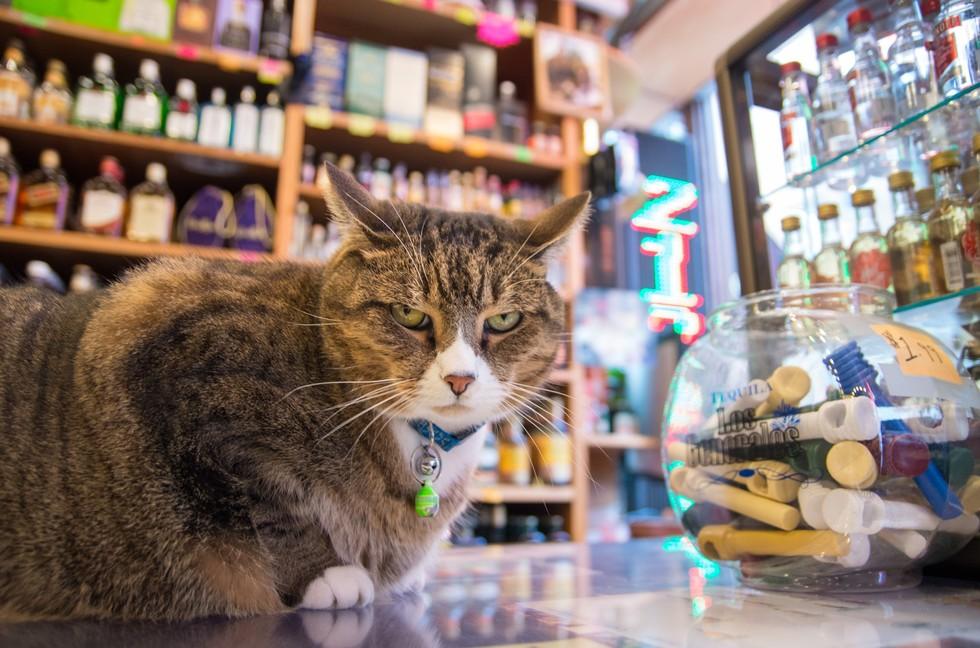 ニューヨークの看板猫5