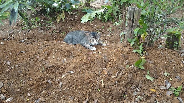 飼い主を待つ猫2