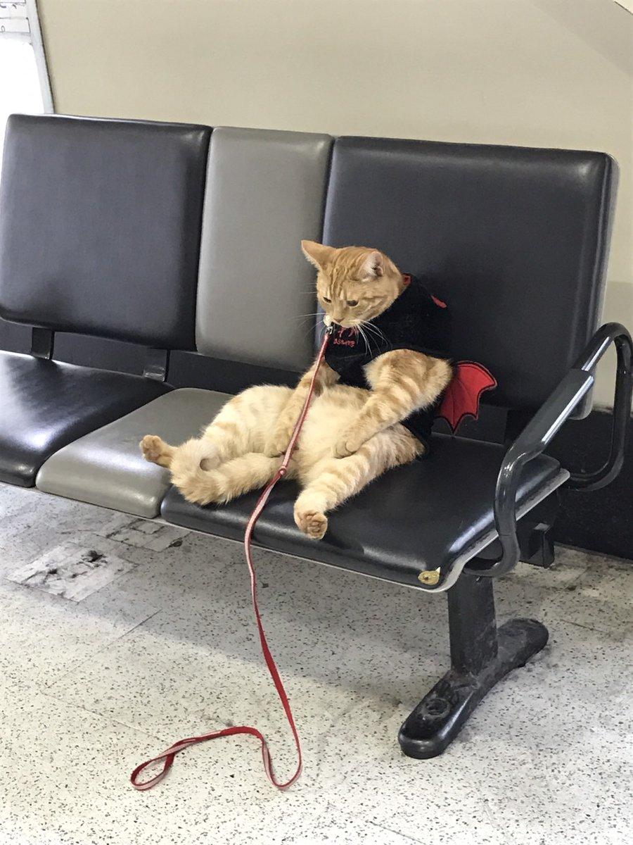 駅にいるおっさん猫1