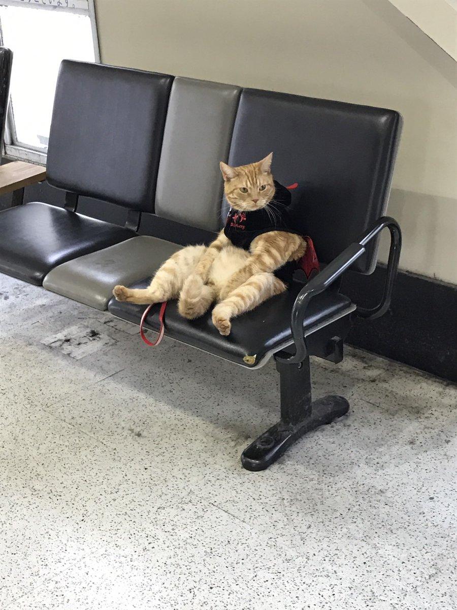 駅にいるおっさん猫3
