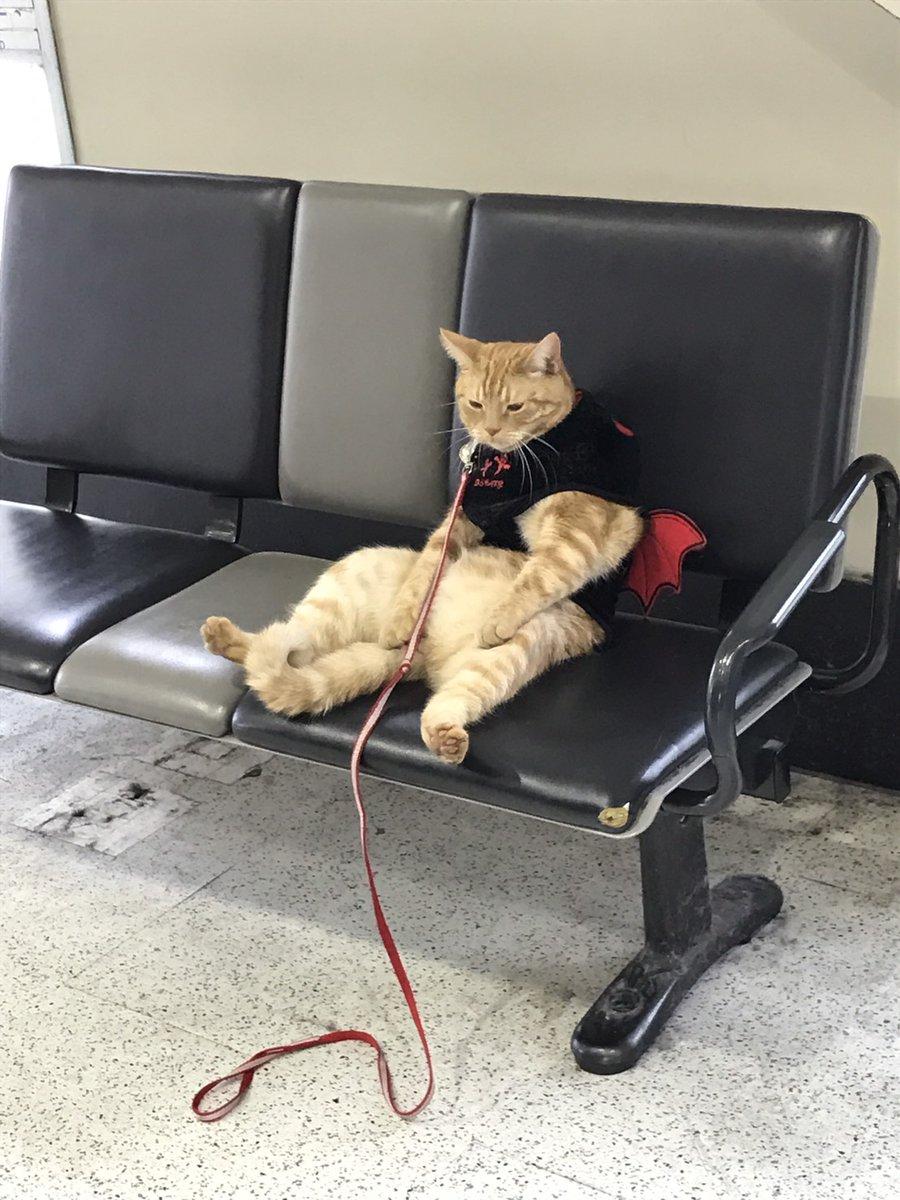 駅にいるおっさん猫2