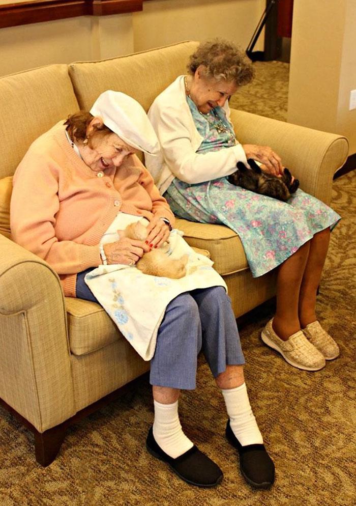 高齢者と保護猫1