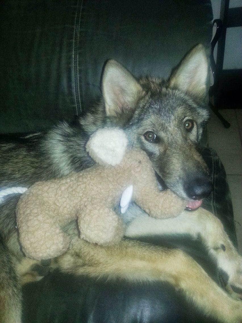オオカミと犬2
