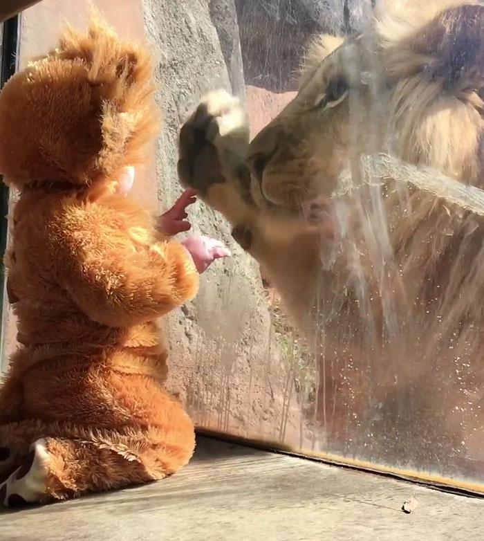 ライオンと赤ちゃん3