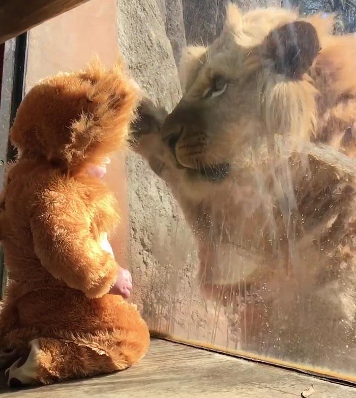 ライオンと赤ちゃん4