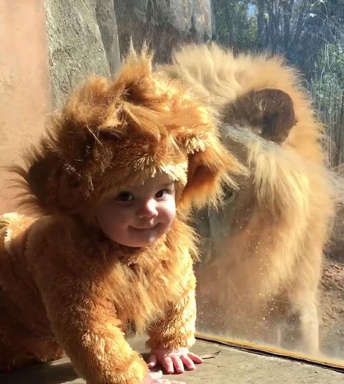 ライオンと赤ちゃん2