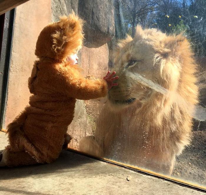ライオンと赤ちゃん1