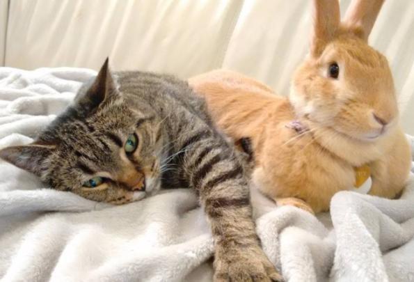 うさぎと猫11