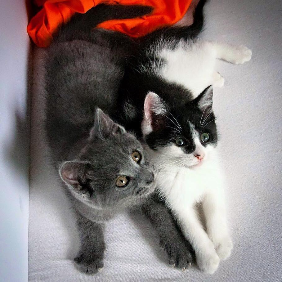two cats6