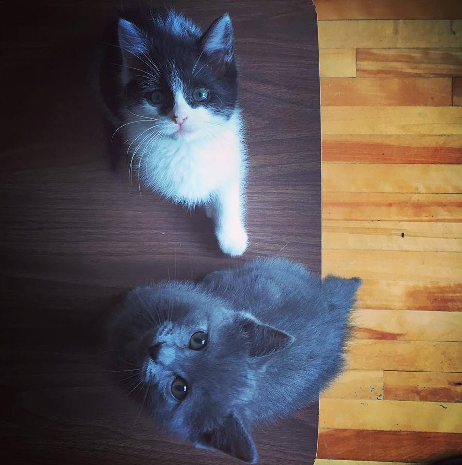two cats5