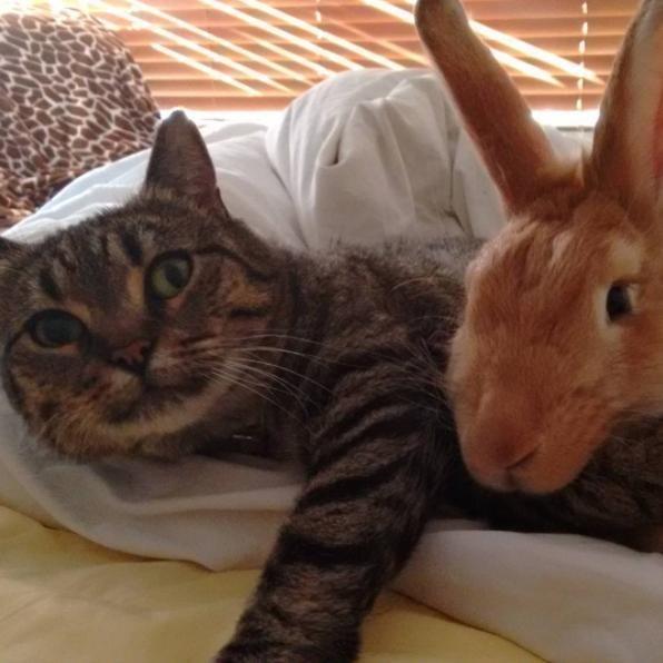 うさぎと猫3