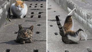 排水溝にハマる猫