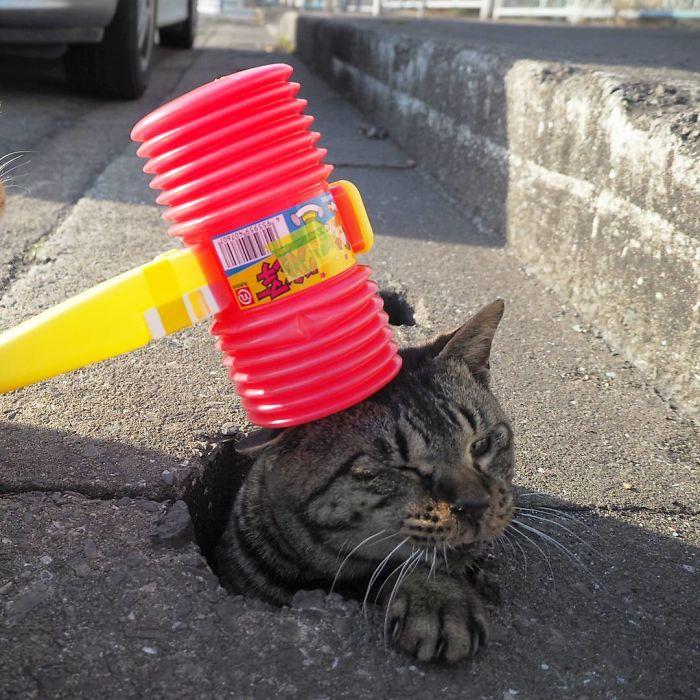 排水溝の猫7