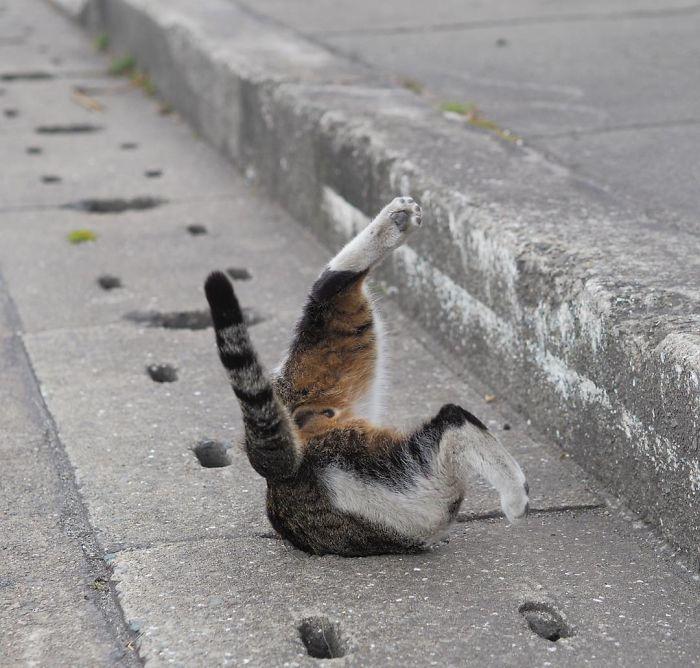排水溝の猫2