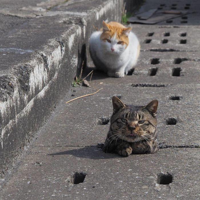 排水溝の猫1