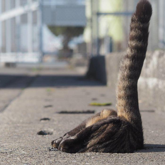 排水溝の猫5
