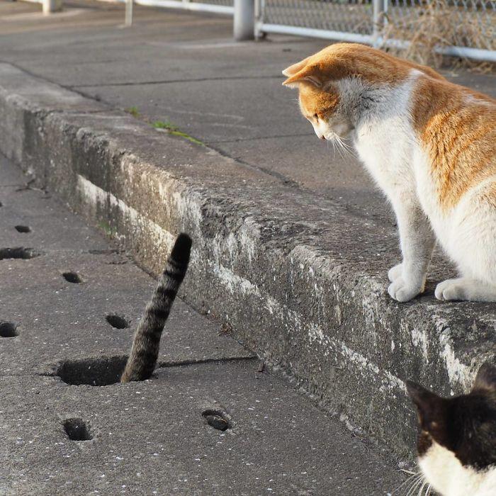 排水溝の猫4